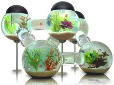 Multilevel aquarium--Too cool