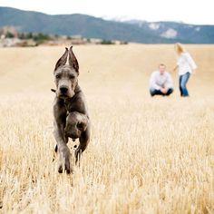 Dog Family Photo!