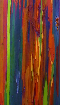 Natures Brushstrokes: Rainbow Eucalyptus – Gone Digital and Back Rainbow Eucalyptus Tree, Chicano Love, Tree Story, Tree Photography, Tree Bark, Photo Tree, Linocut Prints, Texture Art, Textures Patterns