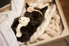 This Adorable Newborn Kitten Photo Shoot Will Make Your Heart Melt