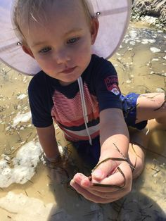 Mission: The Beach-Comber | Caption: We found cone shells with animals living in them, and got to rescue a lady beetle. | Entrant: C&K Caloundra | © Nature Play QLD 2016
