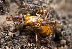 What are the leading causes of death among queen ants? - Quora