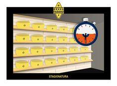 """Grana Padano La filiera prosegue! Tolte dalla salamoia, le forme restano qualche ora ad asciugare nella """"camera calda"""" prima di essere trasportate nel magazzino di stagionatura."""