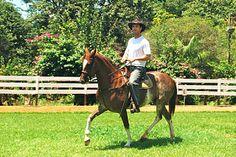 Rodrigo Junqueira Reis Santoro e Milonga Mangalarga.  Mangalarga Mangalarga: VETAM Veterinária Alta Mogiana. Tratamento de  Superstar para seu cavalo.