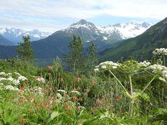 Seward Exit Glacier Harding Icefield Trail landscape Alaska PleinAirEnVR