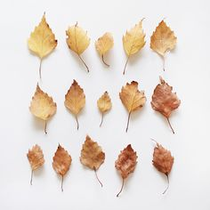 the beauty of leaves Seasons Of The Year, Best Seasons, Autumn Day, Autumn Leaves, Hello Autumn, Desgin, Kubo And The Two Strings, Autumn Aesthetic, Gold Aesthetic
