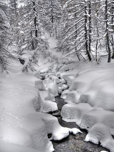 Soft winter | Flickr - Photo Sharing!