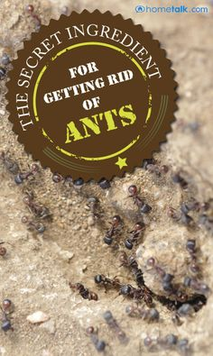 One Household Cleaning Product That Will Get Rid of Ants for Good! I actually did this, it worked! I kept spraying the crap out of them