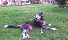 Mi perro viejo Old dog Husky, Dogs, Animals, Old Dogs, Animals And Pets, Animales, Animaux, Pet Dogs, Doggies