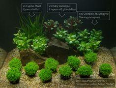 Aquarium plant set Aquascape