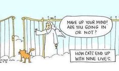 How cats end up with nine lives. #catoftheday