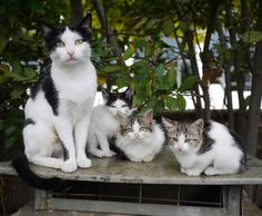 "10"" x 12"" Photography Print by Stephanie Sadler - Stray Cats in Athens, Greece - Travel - Kittens"