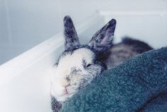 Bunny Doesnt Mind If His Face Gets Squished As Long As He Gets the Cozy Spot He Wants