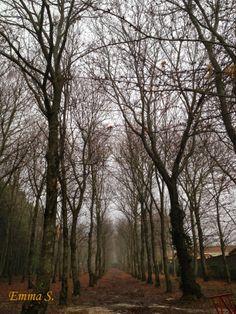 È per l'uomo come per l'albero. Quanto più egli vuole elevarsi in alto e verso la luce, con tanta più forza le sue radici tendono verso terra, in basso, verso le tenebre, l'abisso. Friedrich Nietzsche