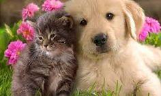 Risultati immagini per buongiorno cani