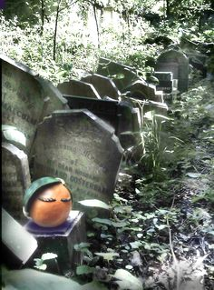 A cemetery might not seem like the sort of place a hip young orange would want to hang out. But if you're a goth, a soul-searching poet, or shooting the album cover for your band, then Abney Park cemetery is the place to go. It's an overgrown wonderland, with ancient tombs and a burnt out abandoned church hidden at the centre. Very dark and moody.  In fact, it's the perfect place to shoot my next short film – 'Vitamin C Saw'. Ancient Tomb, Place To Shoot, Soul Searching, Bury, Short Film, Poet, Cemetery, Hanging Out