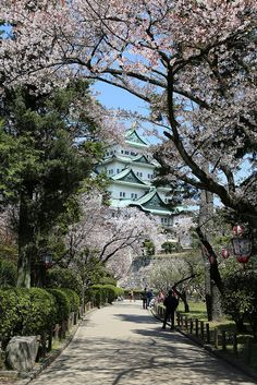 Find images and videos about japan, sakura and caslte on We Heart It - the app to get lost in what you love. Nagoya, Cultura Pop, Paris Travel, Far Away, Dream Life, Believe In You, South Korea, Places Ive Been, Wander