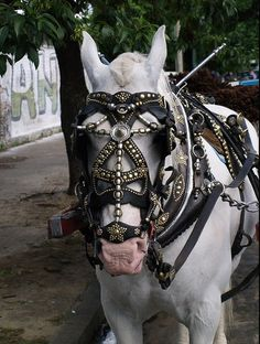 Criollo Horse Harness in Argentina.