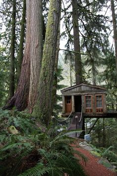Forget HGTV, Live In A Tree! Animal Planet's 'Treehouse Masters' Premieres This Month - Architizer