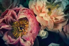 Helen Bankers creates beautiful floral images such as 'Soul Peonies' that are reminiscent of still life paintings in the ...