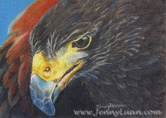 Original ACEO SPRING2015 Eagle realism color pencil drawing by Jenny Luan #Realism