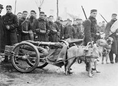 Belgian machine gunners with their dog-drawn gun carriages on the Western Front on 5 December 1914.