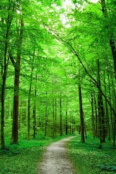 a forest bursting in the fresh greens of a new Spring.