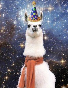 Funny animals Happy Birthday