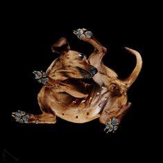 Under-Dogs: Fantásticas fotografías de perros desde abajo