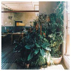 Dreamy Greens #plantspiration