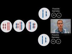 Chromosomal Inheritance - YouTube
