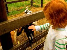 Collingwood Children's Farm is only five kilometres from the centre of Melbourne, nestled on a bend of the Yarra River lies seven hectares of.