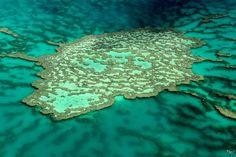 Grande Barrière de corail (Australie)« Un écrin géant pour des bijoux coralliens. » Nathalie MICHEL Pollution, sédimentation, hausse des températures, acidification des eaux, autant de facteurs qui menacent les récifs coralliens. Depuis le début de la révolution industrielle, l'océan a déjà subi une augmentation de 26% de son niveau d'acidité.