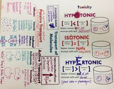 We Teach High School: Cell Transport & Tonicity Doodle Notes