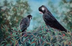 Painting: 'Black & White Tailed Cockatoo'