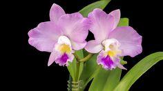 La orquídea es la flor más hermosa del mundo | Cuidar de tus plantas es facilisimo.com