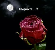 Beautiful Roses, Good Night, Good Morning, Rose Images, Moonlight, Flowers, Plants, Paracord, Bonjour
