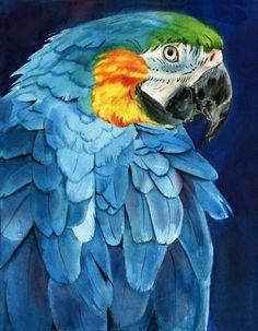 Macaw Parrot art Print of watercolor painting by rachelsstudio, Arte Zebra, Zebra Kunst, Zebra Art, Watercolor Bird, Watercolor Animals, Watercolor Paintings, Painting Art, Watercolors, Tropical Birds