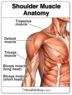 Shoulder Anatomy: Trapezius muscle pain, deltoid muscle, bicep muscle, etc. Deltoid Muscle Pain, Bicep Muscle, Muscle Spasms, Shoulder Muscle Anatomy, Shoulder Muscles, Shoulder Tendonitis, Shoulder Injuries, Arthroscopic Shoulder Surgery