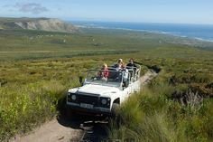 Visit Grootbos in the Overberg for a unique Fynbos Safari experience