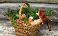 Lista ciupercilor admise a fi comercializate http://ciupercomania.blogspot.com/2013/11/lista-ciuperci-comercializate.html prin piete si nu numai.