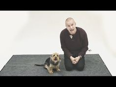 ▶ How Do Dogs React to Human Barking? - by Jose Ahonon, YouTube #Dogs #Human_Barking