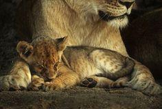 Safe and Snoozing by Rudi Hulshof - Photo 72817781 - 500px
