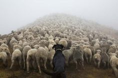 Photographer and dog lover Andrew Fladeboe set out to capture images ofanimals because he believed no one was portraying them the way he saw them. 'The animals in our works stand on their own as sentient beings. They occupy the print with an aura of dignity and command a level of respect from the viewer', […]