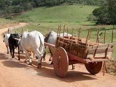 Carro de boi, poesia e saudade, por Osvaldo Piccinin - Notícias Agrícolas