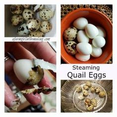 Farm fresh eggs do not hard-boil nicely.  Period.  Have you ever tried hard-boiling truly fresh eggs? By truly fresh I mean eggs that were laid that same day or a few days past.  Goodness, the damage done to the egg white is horrible!