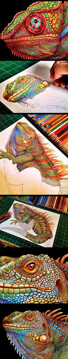 The Most Detailed Drawing Of A Chameleon. I don't do drawings like this very often...maybe I should try it sometime! Colored pencil.