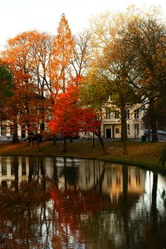 Orange, red, brown & green autumn Trees @ Lepelenburg Utrecht