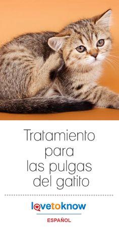 350 Ideas De Mascotas En 2021 Mascotas Perros Perro Gato