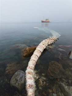 Partially submerged whale carcass  Photo credit: Espen Bergersen